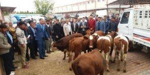Ergani'de genç çiftçilere düve
