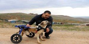 Felçli köpeğe yürüteç desteği