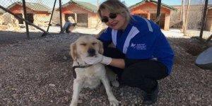 13 köpeği Belediye görevlileri mi öldürdü?