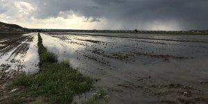 Su seviyesi yükseldi mısır ekili araziler su altında kaldı