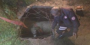 Nusaybin'de foseptik çukuruna düşen inek kurtarıldı