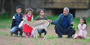 Şanlıurfa'da nesli tükenmekte olan ceylanlara bakıyor