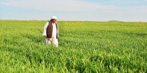 Yağış miktarındaki artış çiftçiye umut oldu