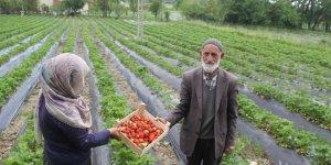Sason'da yılın ilk çilek hasadı