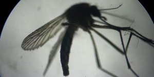 Diyarbakır'da sivrisinek istilası