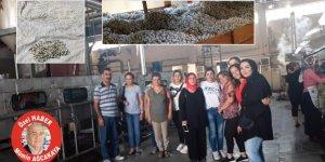 Kulp'ta kadınlar 47 ton koza üretti