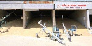 Aşırı yağışlar çiftçinin beklentisini karşılayamadı