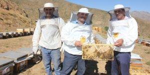 Türkiye'nin en kaliteli balının hasadına başlandı