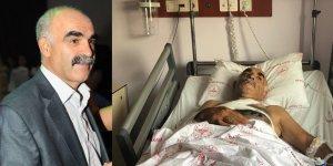 Tunceli Ovacık'ta ayı saldırısı