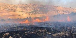 Mazıdağı'nda 300 dönüm ağaçlık alan kül oldu