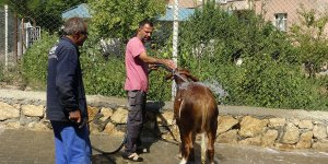 Bu da hayvan yıkama servisi
