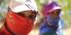 Fıstık toplayan kadınlar eşit işe eşit ücret istiyor