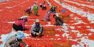 Dersim'den Avrupa'ya kuru domates ihracatı