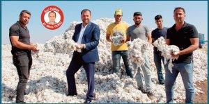 VİDEO - Pamuk harmanda, çiftçi isyanda