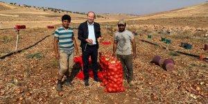 Soğan tarlada 60 kuruş, tezgâhta 1.25 TL