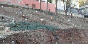 81 ilde ağaç dikildi, Diyarbakır'da ağaçlar kesildi!