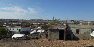 Çınar'da inek hırsızlığı