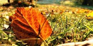 VİDEO - Diyarbakır'da sonbahar…