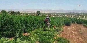 Diyarbakır'da narkotik operasyonu: 1 ton 36 kilogram esrar ele geçirildi