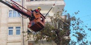 Bağlar Belediyesi'nden 15 kişilik ekiple ağaç bakımı ve budama çalışması