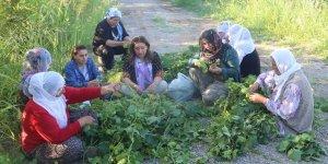 Kayyum geldi 50 kadın bahçelerinden oldu