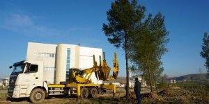 Siirt'te sular altında kalacak ağaçların üniversite yerleşkesine nakli