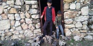 Diyarbakırlı Lise öğrencisinden sokakta kalan köpek yavruları için destek talebi