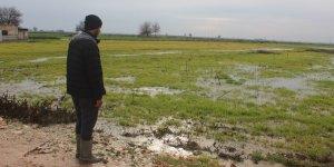 Şanlıurfa'da sağanak: Ekili araziler sular altında
