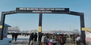 Van Erciş'te hayvan borsasında can pazarı: Bir ölü, 2 yaralı