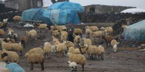 Şanlıurfa'da hayvancılık can çekişiyor