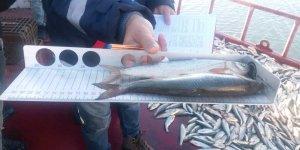 Van'da balıkçılara denetim