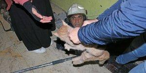 VİDEO - Diyarbakır'da felçli kediyi itfaiye ekipleri kurtardı