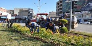 Cizre'de yeşillendirme çalışmaları