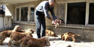 Depremzedenin köpek sevgisi, onlardan ayrılamıyor