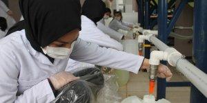 Öğrenciler dezenfektan üretimini iki katına çıkardı