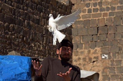 barisin-simgesi-600-yillik-gelenek-yasatiliyor----(3).jpg