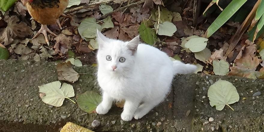 diyarbakir'daki-hayvansever-30-van-kedisi-ile-basa-cikamiyor-(3).jpg