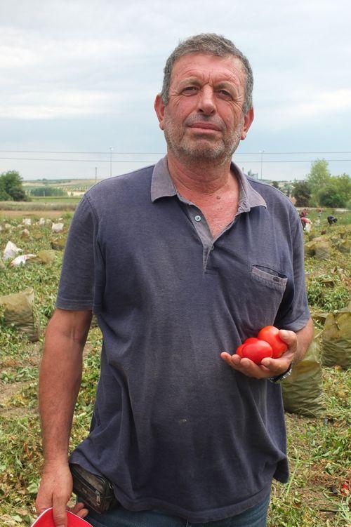 markette-2.5-tl-olan-domates,-tarlada-30-kurus-001.jpg