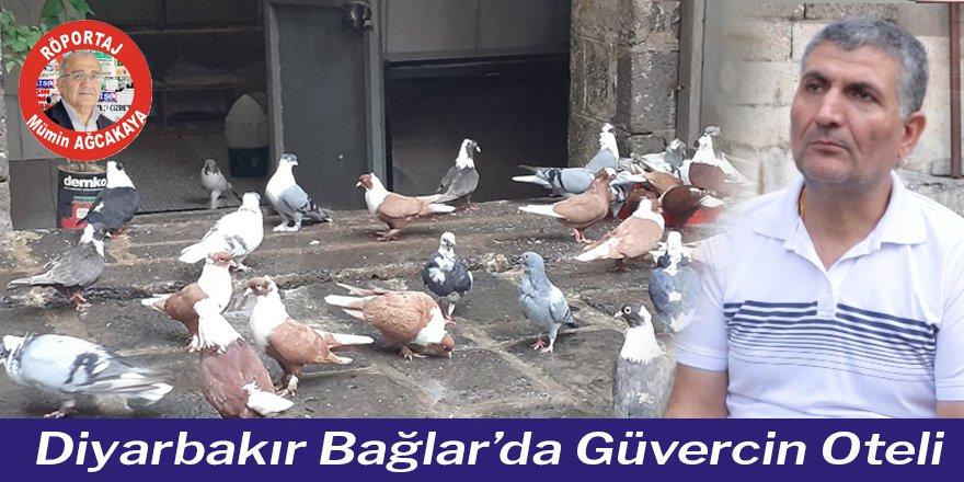 Diyarbakır Bağlar'da Güvercin Oteli