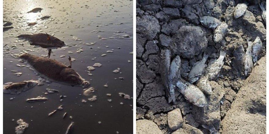 Diyarbakır'da 13 yıldır temizlenmeyen gölet risk taşıyor