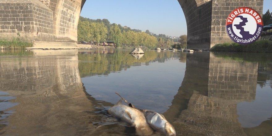 Dicle Nehri'nde balık katliamı!