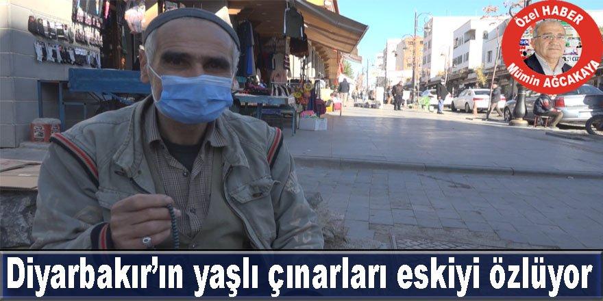 Diyarbakır'ın yaşlı çınarları eskiyi özlüyor